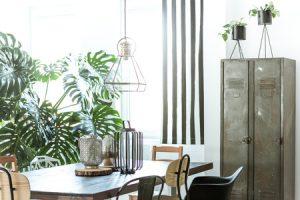 Les plantes dans la décoration d'intérieur